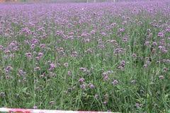 Цветения весны стоковая фотография rf