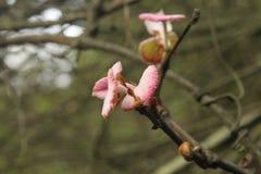 Цветения весны стоковое изображение rf