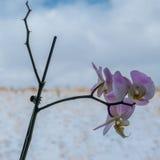 Цветения весны Стоковые Фото