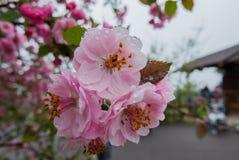 Цветения весны Стоковое фото RF