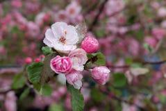 Цветения весны Стоковое Фото