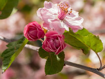 Цветения весны Стоковые Изображения