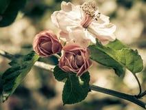 Цветения весны Стоковая Фотография