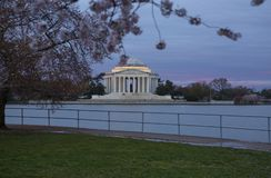 Цветения вишневого дерева обрамляют мемориал Jefferson в DC Вашингтона на восходе солнца Стоковая Фотография RF