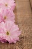 Цветения вишни весны на деревенской древесине Стоковое Изображение RF