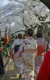 Цветения вишни в токио с платьем кимоно Стоковая Фотография