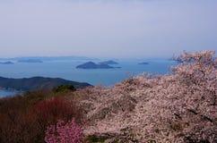 Цветения вишни и море Seto средиземное Стоковое фото RF