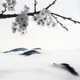 Цветения вишни типа BW Стоковые Изображения