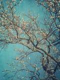 Цветения груши весной Стоковые Фотографии RF