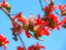 Silk дерево Стоковое Изображение RF