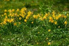 цветения красоты пасхи Стоковое Изображение RF