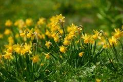 цветения красоты пасхи Стоковые Изображения