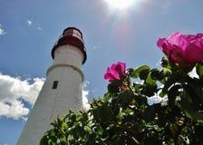 Цветения морем Стоковое фото RF