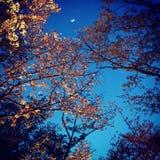 Цветения ночи Стоковое Фото