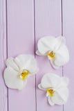 3 цветения орхидеи Стоковые Изображения
