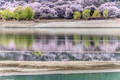 Цветения персика вдоль Brahmaputra стоковое фото