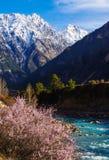Цветения персика в River Valley Стоковое фото RF