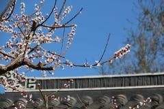Цветения персика на стрехах стоковые изображения
