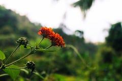 Цветения цветка Стоковые Изображения