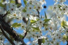 Цветения Стоковые Изображения