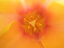 цветень стоковое фото rf