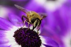 Цветень Collectin Стоковые Изображения