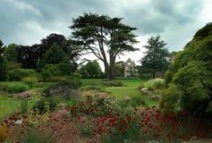 Цветеня лаванды на саде Nyman Стоковая Фотография