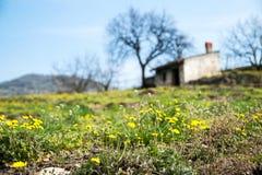 Цветеня весны в тосканской сельской местности стоковое фото rf