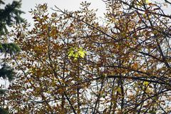 Цветеня каштана в осени Стоковые Фотографии RF