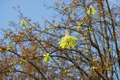 Цветеня каштана в осени Стоковое фото RF