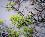 Цветеня каштана в осени Стоковое Изображение RF