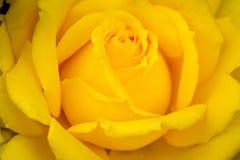 Цветеня макроса розовые в саде Стоковые Фото
