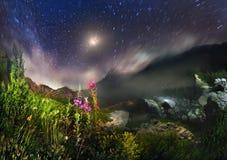 Цветеня Fireweed в гористом тракте Стоковое фото RF