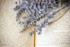 цветет лаванда Стоковые Фото