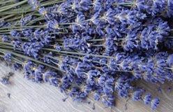 цветет лаванда Стоковое Фото