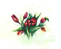 цветет акварель Стоковое фото RF