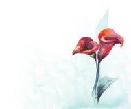 цветет акварель Стоковые Фотографии RF