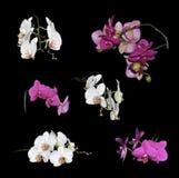 цветет белизна пурпура орхидей установленная Стоковые Фотографии RF