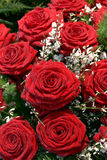 цветет белизна розы красного цвета Стоковое Изображение RF