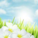 цветет белизна Стоковые Изображения