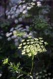 цветет белизна Стоковое фото RF