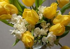 цветет белый желтый цвет стоковые фотографии rf