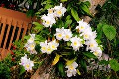 цветет белизна орхидеи Стоковое Фото