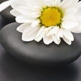 цветет белизна спы жизни все еще Стоковое фото RF