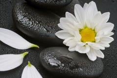 цветет белизна спы жизни все еще Стоковое Фото