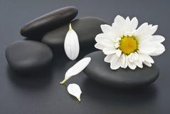 цветет белизна спы жизни все еще Стоковые Изображения