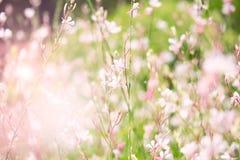 цветет белизна Стоковое Изображение RF