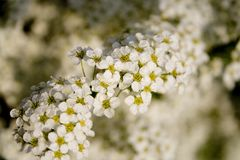 цветет вал Стоковое Изображение