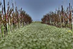 цветет вал saplings Стоковое фото RF