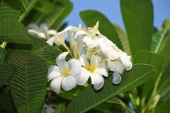 цветет вал Стоковое Фото